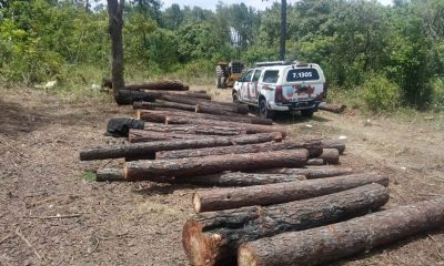 Onze pessoas são presas por desmatamento ilegal em Camaçari