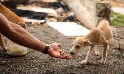 Gapar realiza 2ª Feira de Adoção de Animais em junho no Alto da Cruz