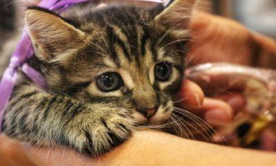 Camaçari: loja Camapet Shop promove feira de adoção com hamsters, cães e gatos