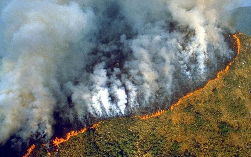 Amazônia em chamas: Salvador terá protesto a favor da preservação da  floresta – Destaque1 – Informação com responsabilidade