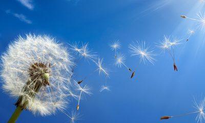 Saúde: confira dicas de como evitar crises alérgicas na primavera