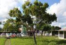 Curiosidades: Camaçari, a cidade com nome de árvore que sofre escassez da espécie