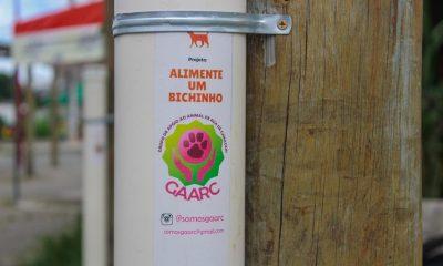 Gaarc luta por qualidade de vida para animais de rua em Camaçari