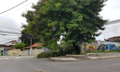 Parte de árvore cai e interrompe fornecimento de energia no bairro Dois de Julho