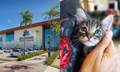 Feira de Adoção no Boulevard possibilita inclusão de animais em novos lares