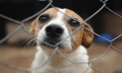 Boulevard Shopping realiza feira de adoção de animais online; saiba como participar