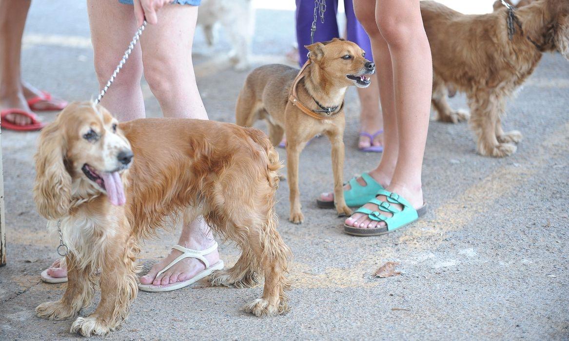 Dezembro Verde alerta sobre maus-tratos e abandono de animais