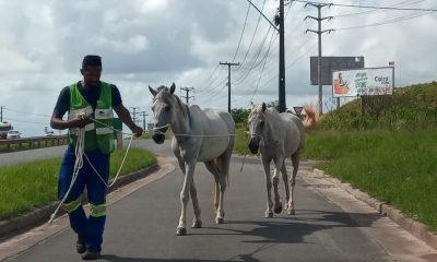 Bahia Norte já registrou mais de 5 mil ocorrências envolvendo animais nas rodovias do Sistema BA-093