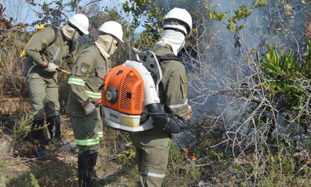 Amigos da Floresta: ação realiza atividades em Camaçari para reduzir área afetada por incêndios