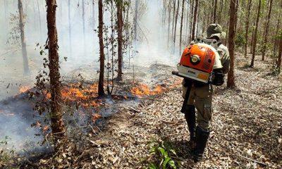 Instituições se unem para combater incêndios florestais na Bahia