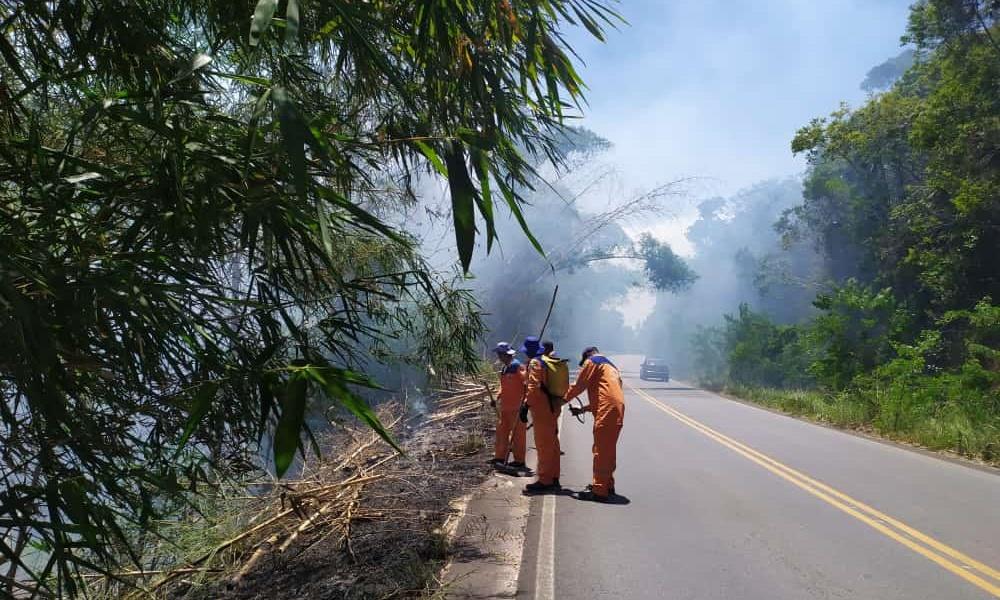 Bambuzal na Via Cascalheira é atingido por incêndio