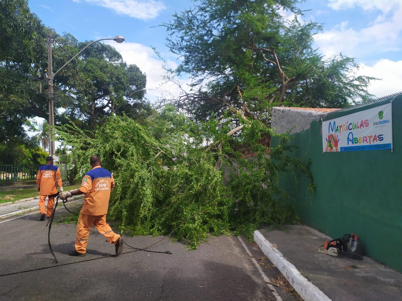 Duas árvores caem devido à instabilidade do tempo em Camaçari