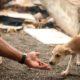 A ausência de políticas para os animais e o trabalho sem reconhecimento dos protetores em Camaçari, por Kaique Ara