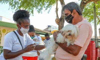 Lauro de Freitas realiza vacinação animal e testagem de doenças neste sábado