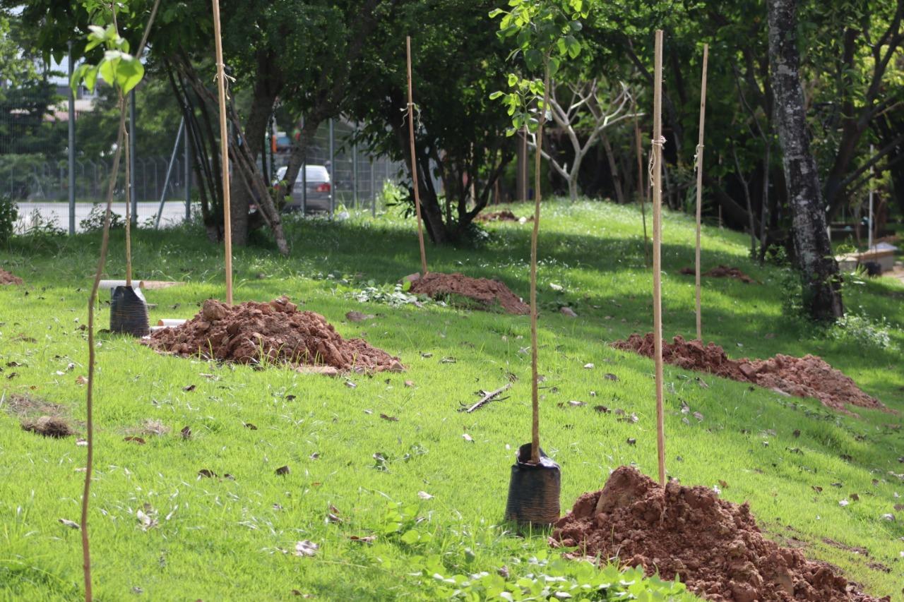 Horto Florestal recebe plantio de 70 árvores nativas da Mata Atlântica