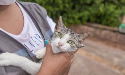 Gatos da colônia de Piatã estão disponíveis para adoção