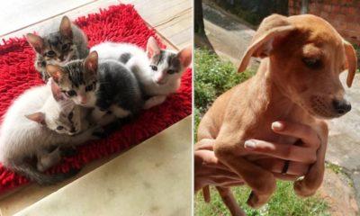Feira de adoção de animais do Gapar e Boulevard Shopping Camaçari acontece neste sábado