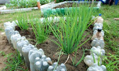 Sedap abre inscrições para entidades plantarem hortas comunitárias em Camaçari