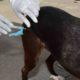 Campanha de vacinação antirrábica pretende imunizar 180 mil animais em Salvador