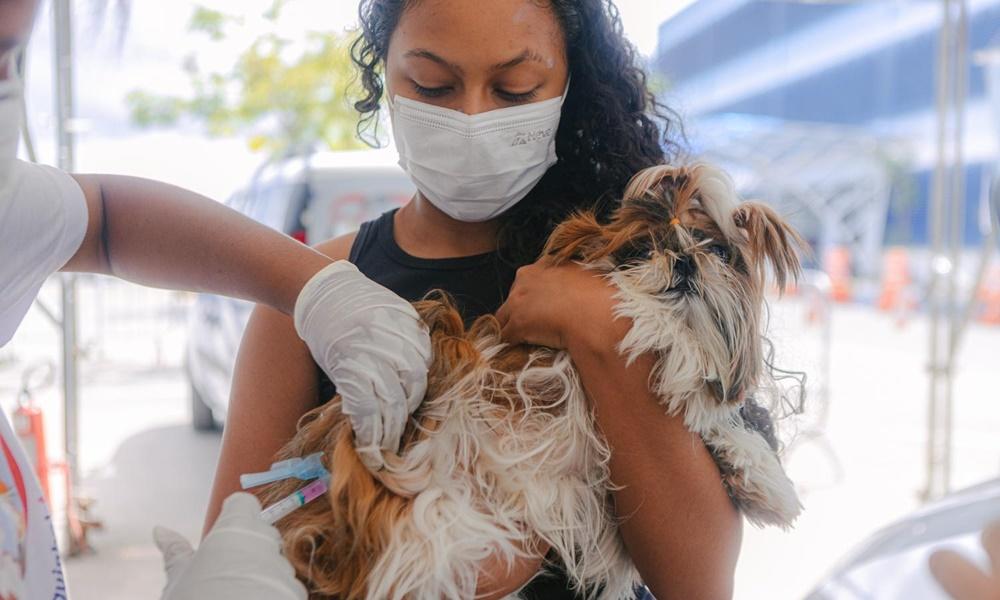 Campanha de vacinação antirrábica em Salvador é prorrogada até o dia 30