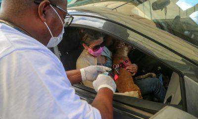 Drive-thru para vacinação antirrábica funcionará no fim de semana em Salvador