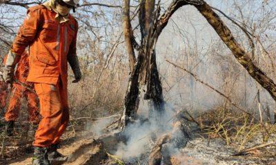 Em chamas: dez cidades baianas sofrem com incêndios