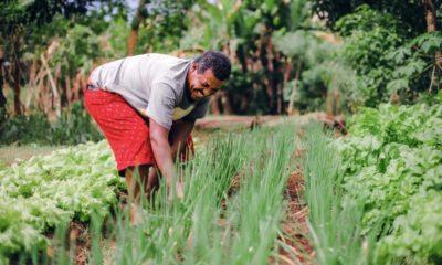 Produtores rurais de Açu da Capivara recebem declaração de aptidão nesta sexta